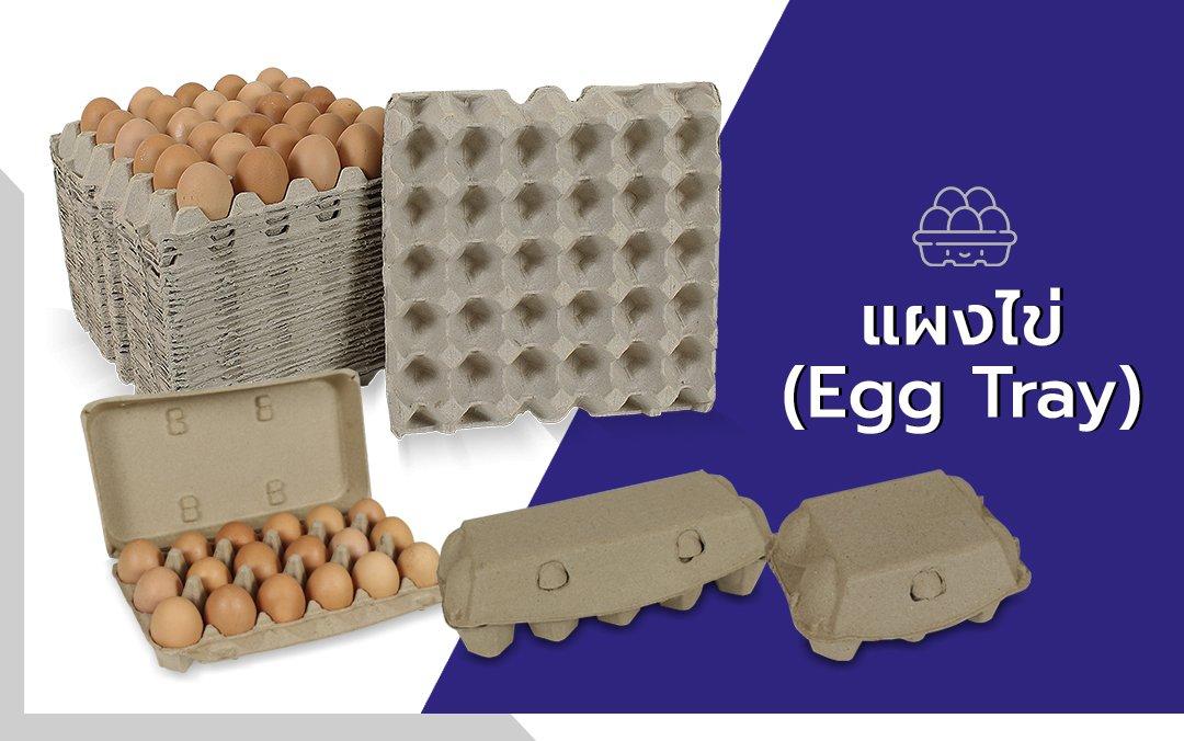 แผงไข่ โรงงานผลิตบรรจุภัณฑ์